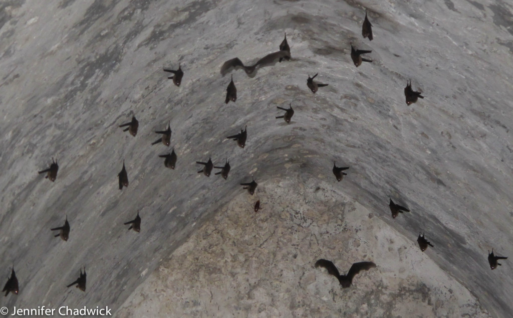 Bats in cell in the fort