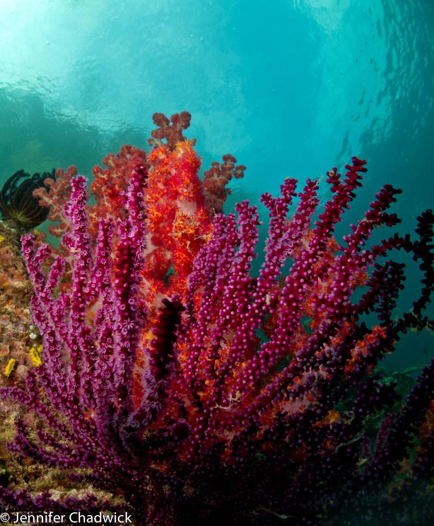 Wetpixel Indonesia 2012-2-9