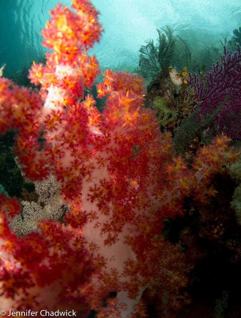 Wetpixel Indonesia 2012-20