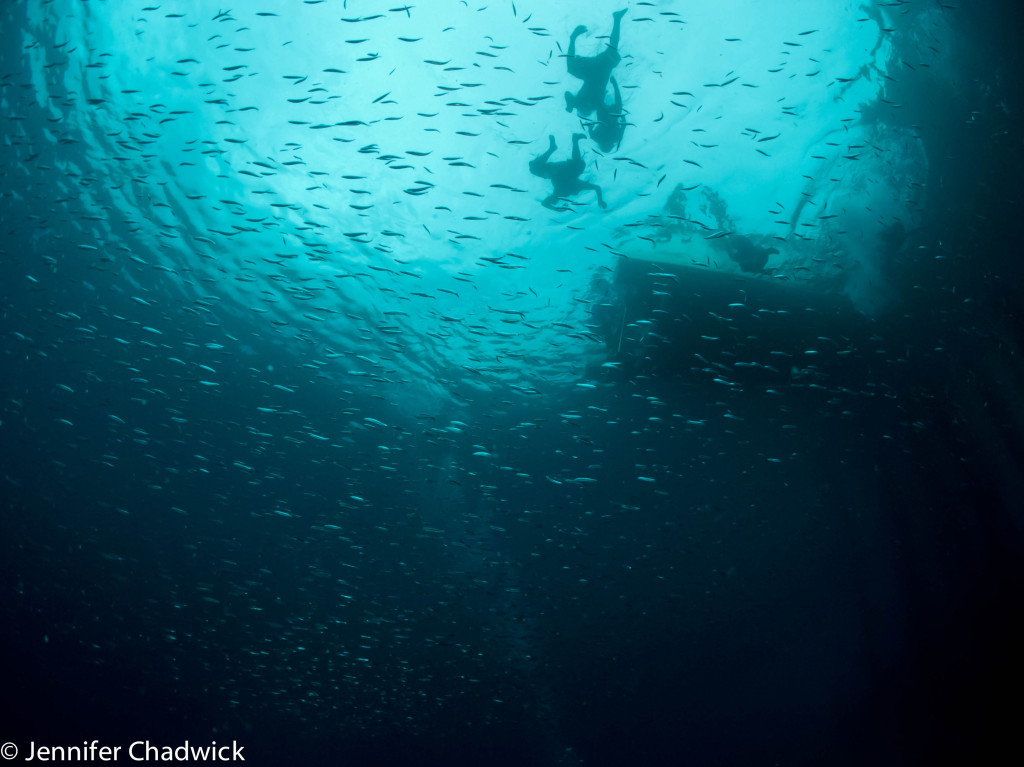 Children through the clouds of glassfish