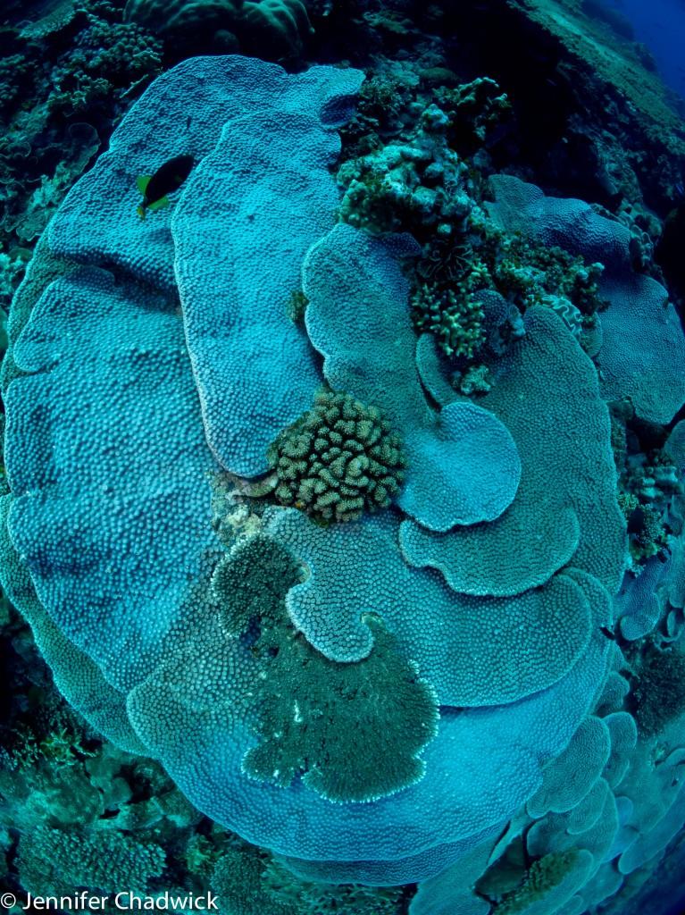 Nusa Laut - Akon