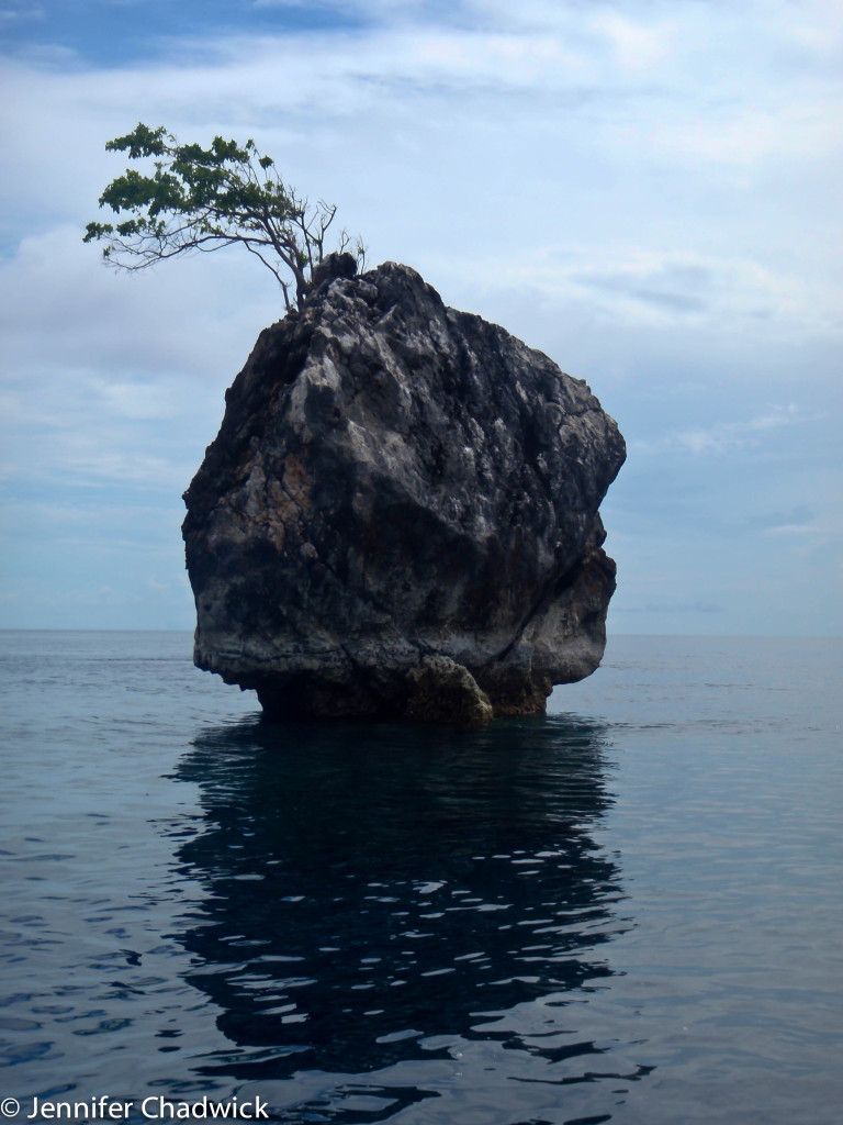 One tree rock